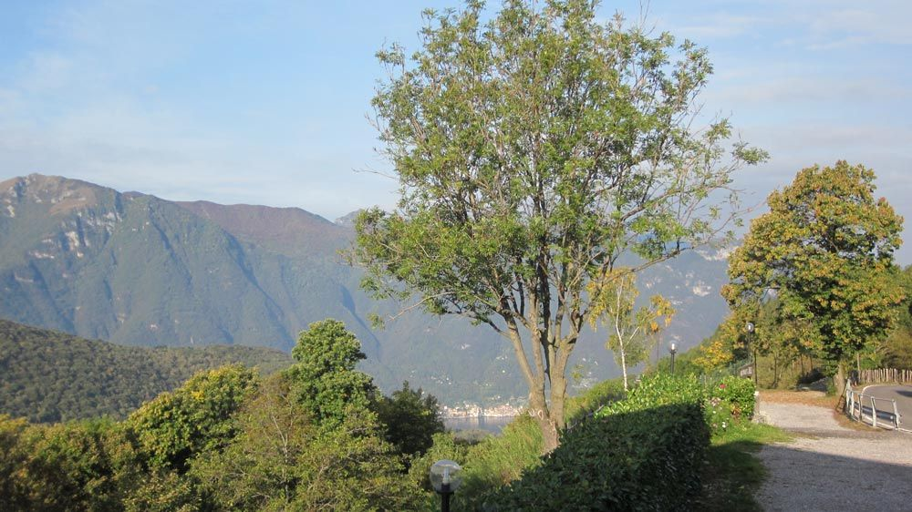 Ristorante sole panorama alberi